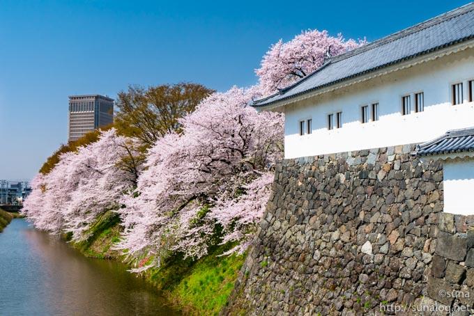 東大手門の白壁と桜