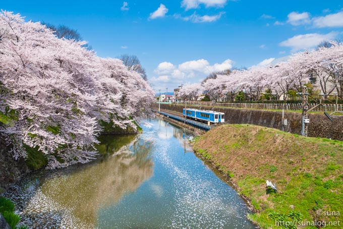 桜とお堀と電車