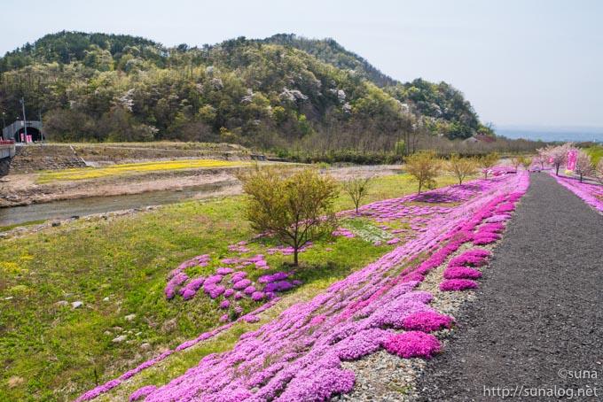 立谷川と芝桜
