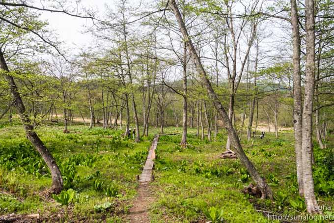 大平地区の水芭蕉の群生地