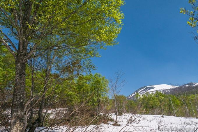 新緑と残雪の月山
