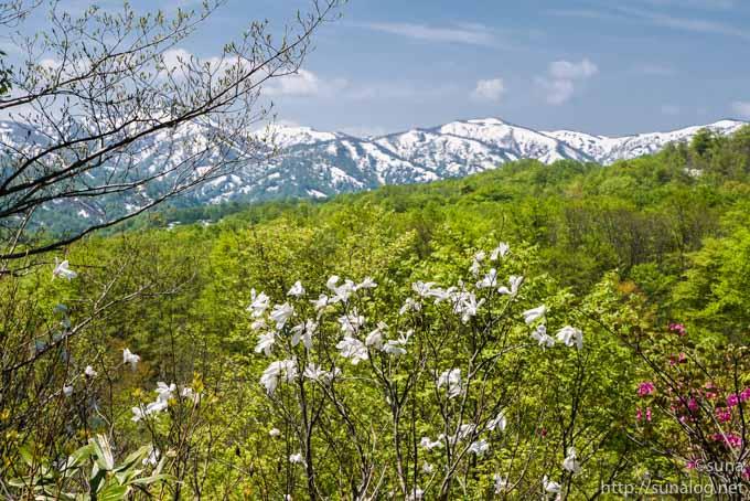 新緑と白い山並み