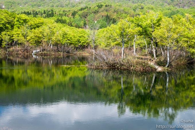 新緑と地蔵池