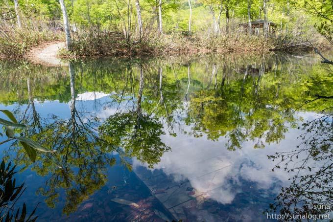 水面に映る新緑