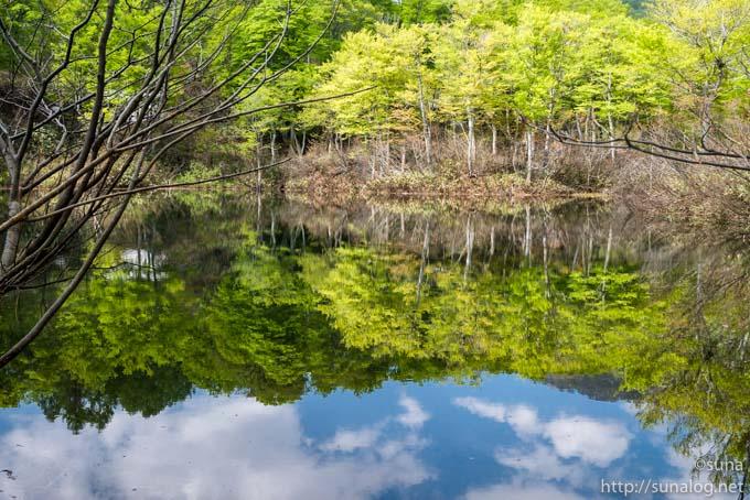 透き通る水面と新緑