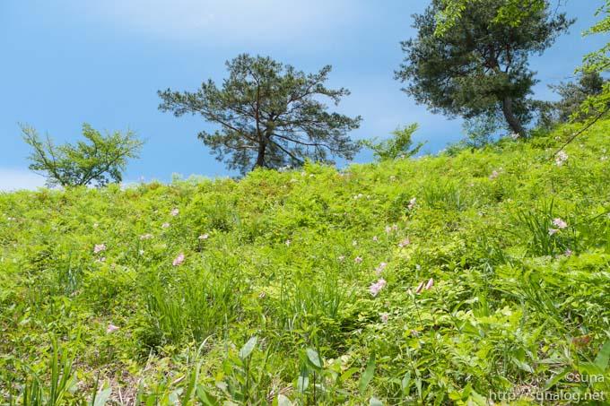 一本松公園の斜面