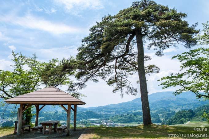 一本松公園の松