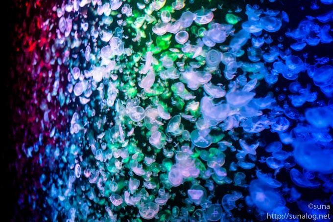 虹色のミズクラゲの大水槽