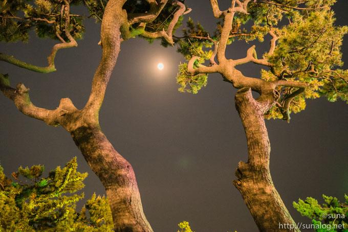 月と松の木