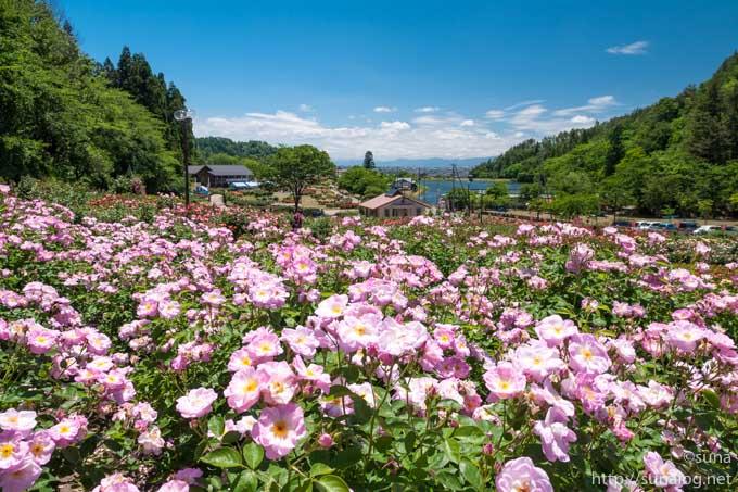 東沢バラ公園と大沢貯水池