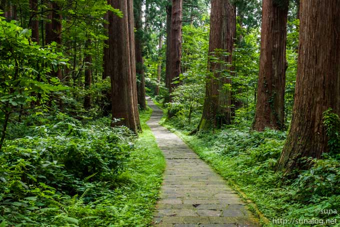 杉並木が美しい参道