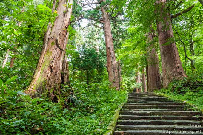 国の天然記念物 羽黒山参道杉並木