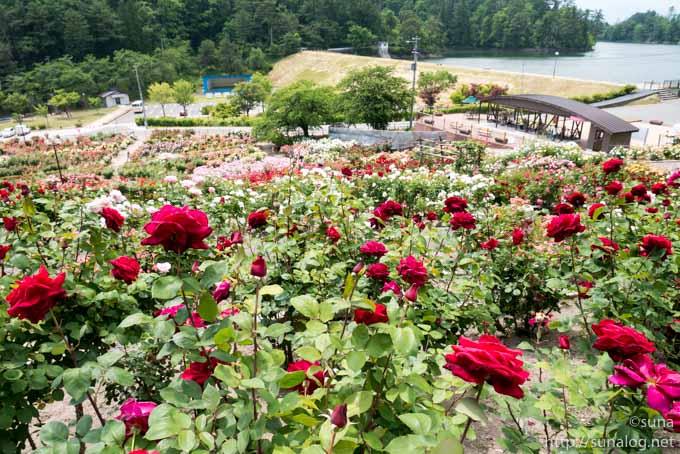 上から見た東沢バラ公園