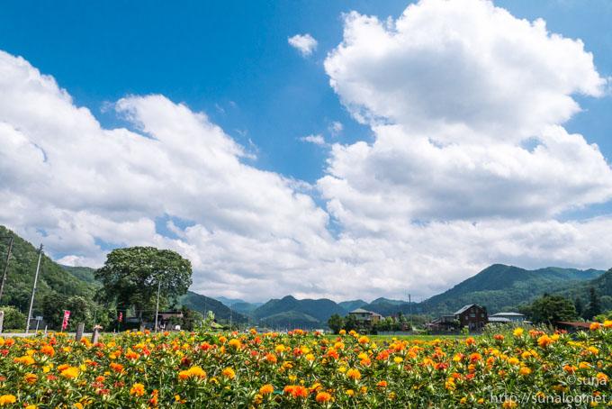夏空と紅花畑