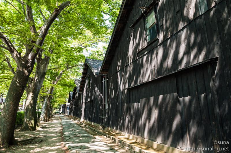 山居倉庫のケヤキ並木
