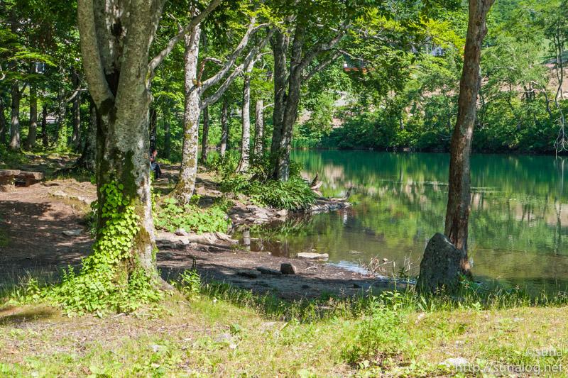 ドッコ沼とブナ林