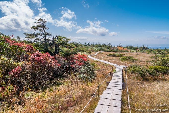 御田ノ神湿原の木道