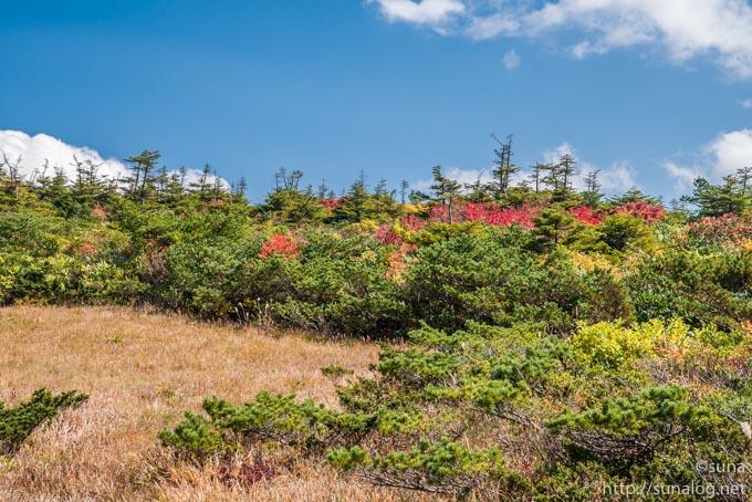 青々とした松と紅葉