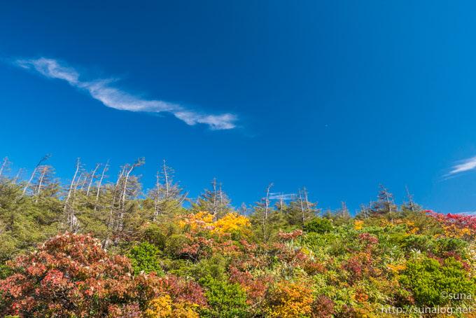 秋深まる蔵王の自然