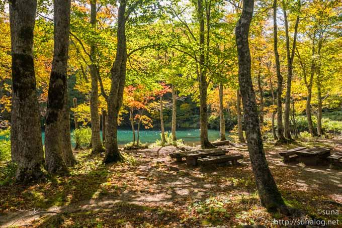 ドッコ沼と紅葉するブナ林