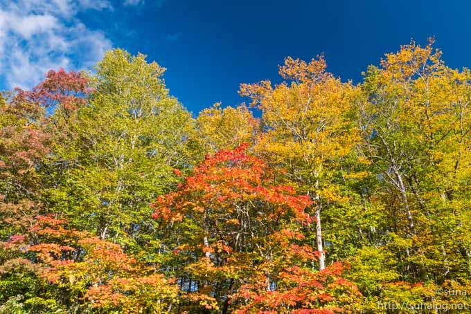 青空とあざやかな紅葉