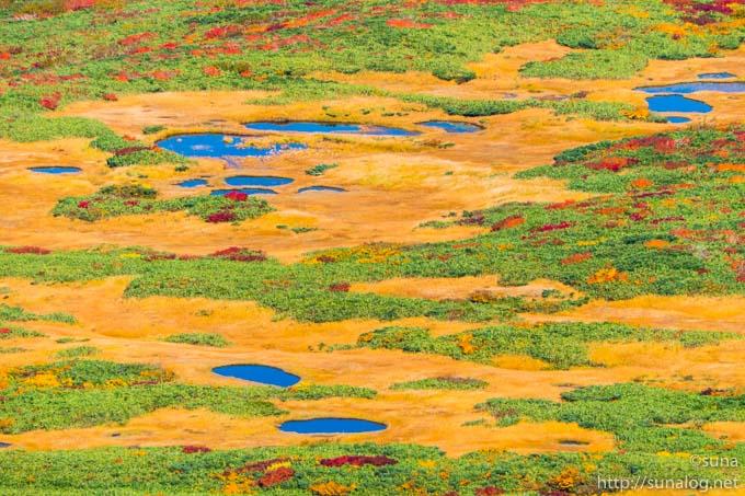 黄金の草紅葉と地糖