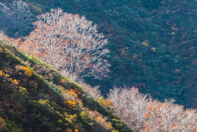 落葉した木々