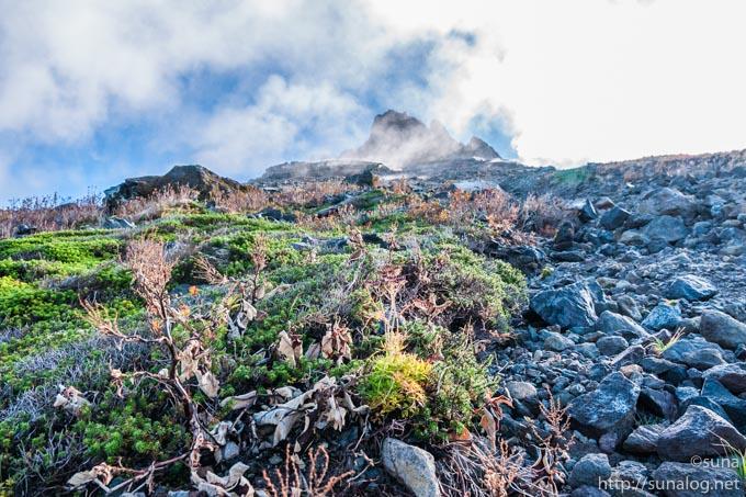 茶臼岳の植物