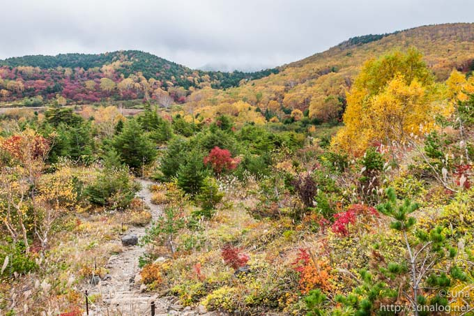 登山道から見た紅葉