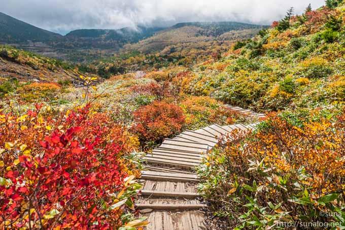 紅葉と登山道の木道