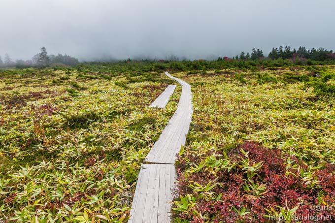 鎌沼周辺の木道