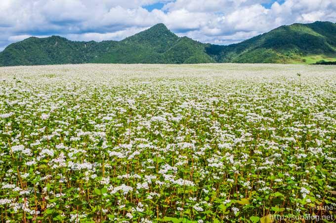 白いそば畑と青空