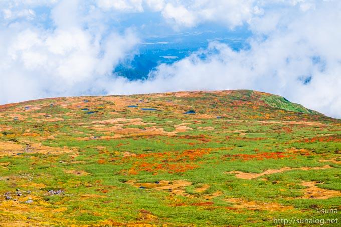 美しい草原の紅葉