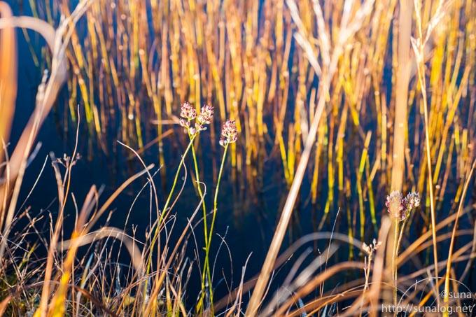 地糖と秋らしい植物