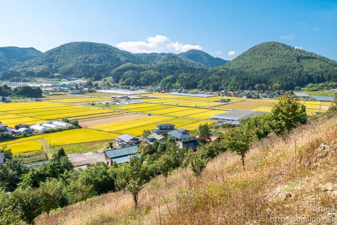 長谷堂城跡から見る秋の田んぼ