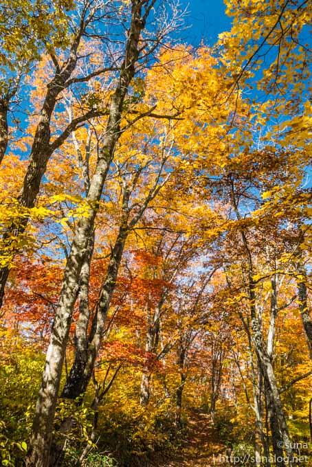 野鳥観察小屋近くの紅葉