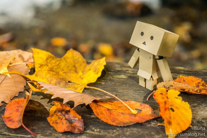 落葉とダンボー