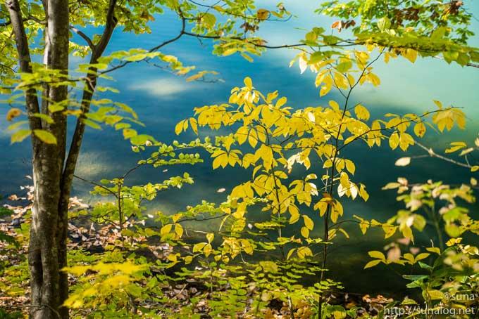あざやかな黄葉ときれいな湖水