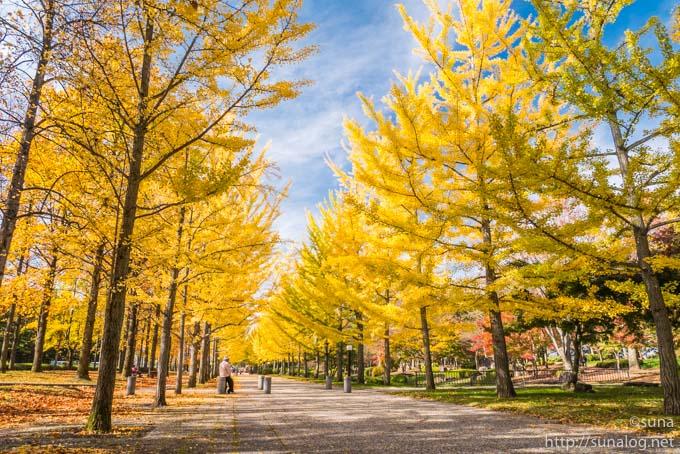 真っ黄色な銀杏並木