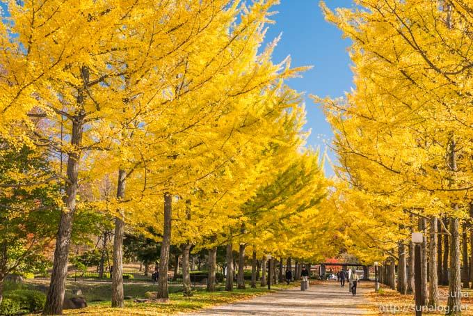 黄葉する銀杏並木
