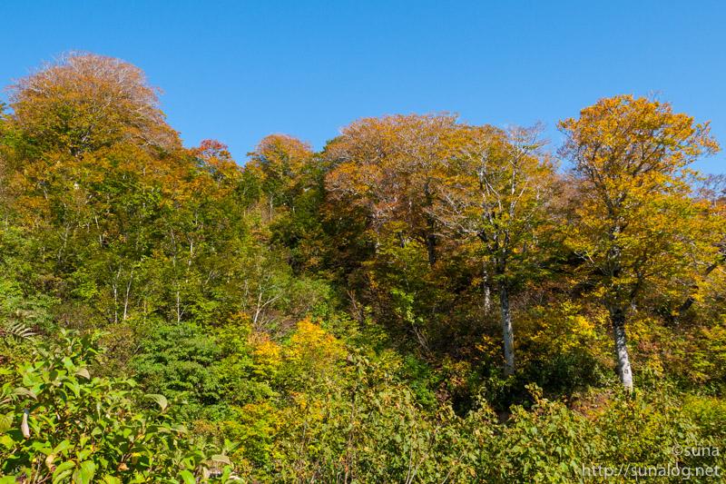 姥沢登山口付近の紅葉