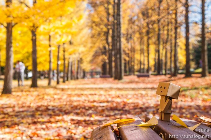秋のベンチとダンボー