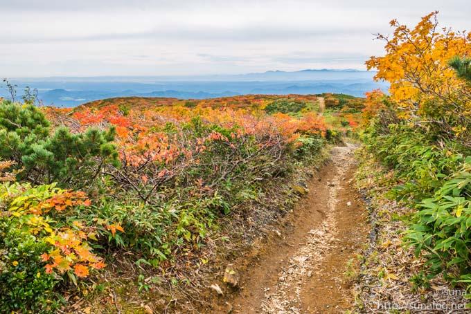 中央コースの登山道