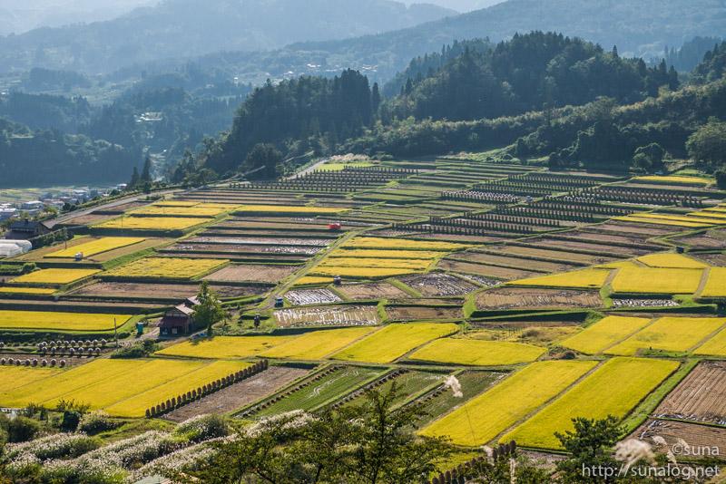 黄金色に染まる椹平の棚田