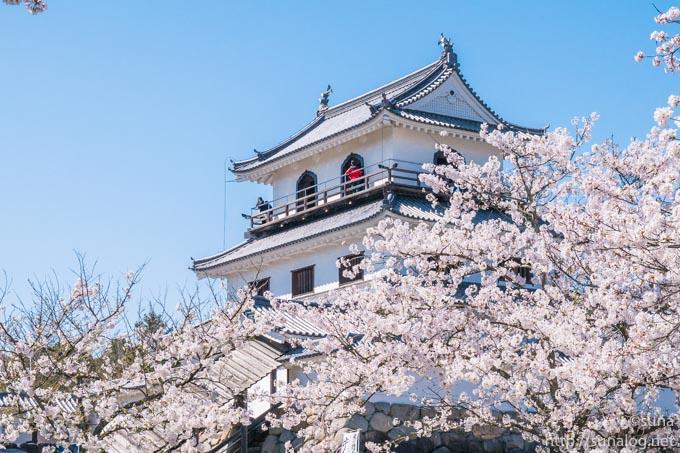 満開の桜と白石城