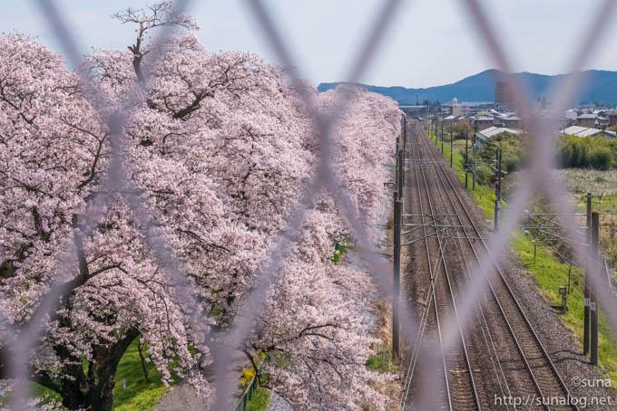 金網越しの桜と線路