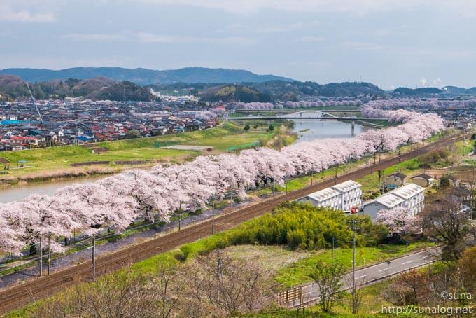 満開の一目千本桜