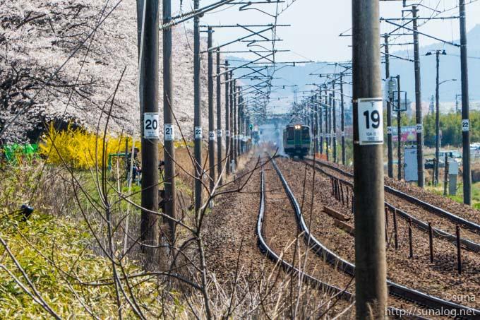 電車と一目千本桜