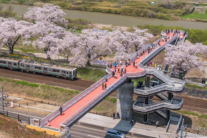 船岡城址公園からのしばた千桜橋