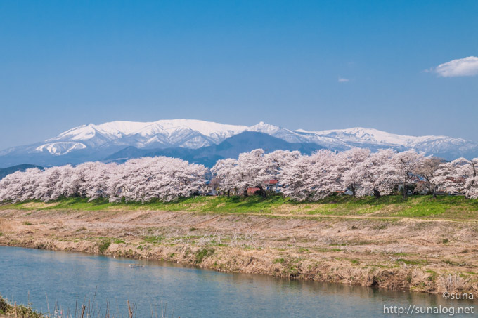 蔵王と一目千本桜